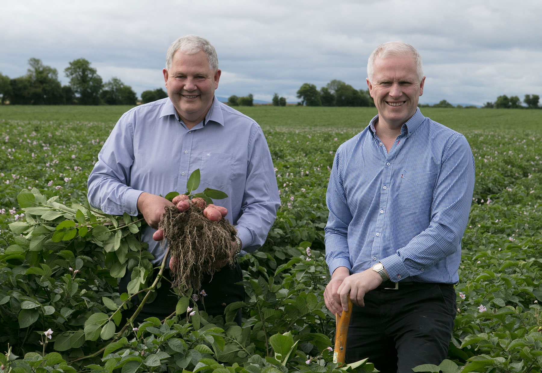 Country Crest and Tesco Ireland renew 20-year potato partnership with €62.5m contract
