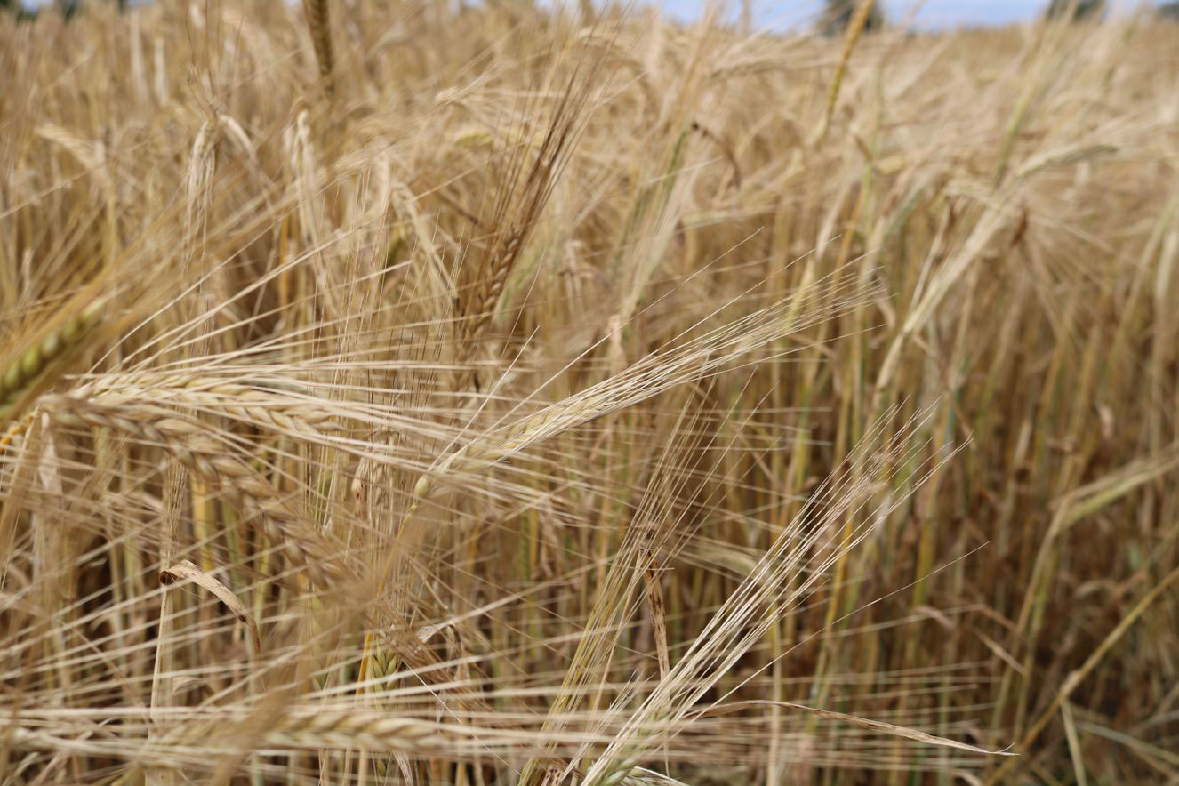 Cereals-2-B-IMG_1108