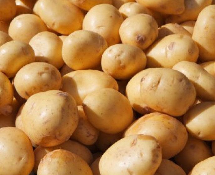 baby-potatoes