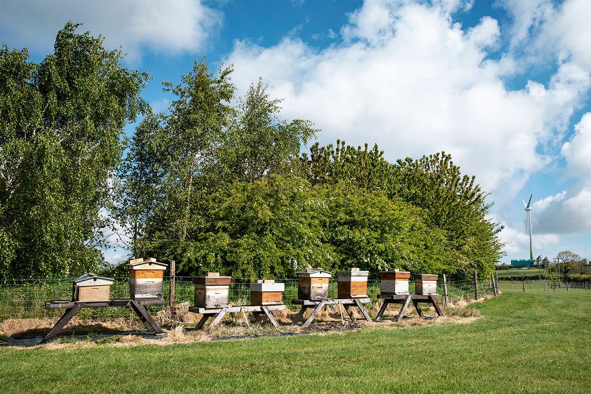 Environment-Bee-Hives_DSC_3350_1920